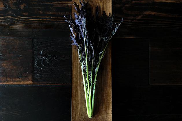 イーストファーム赤からし菜